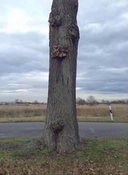 Baum in Ausganglage