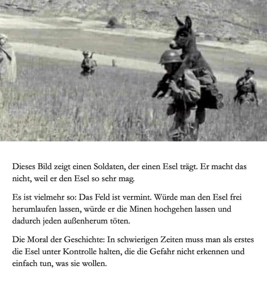 Umgang mit Eseln in Krisenzeiten