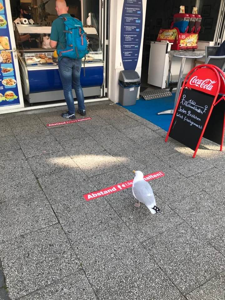 Seagull in Norderney, Germany, keeping an appropriate distance. Photo posted by Ingo Gerlach.