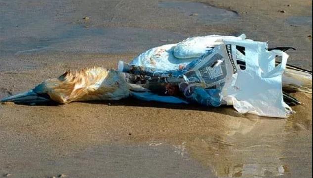 Plastikmüll tötet