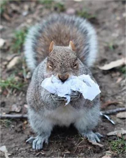 Eichhörnchen mit Plastik-Müll